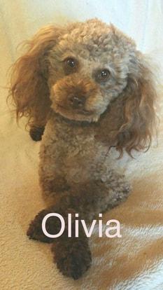 Picture of Olivia